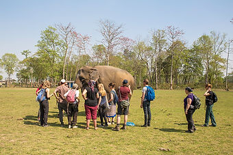 SU4E, Stand Up for Elephants, Tourists feeding Elephant, Sauraha, Nepal