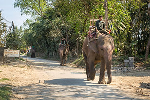 Elephant and Mahout walking in the streets of Sauraha, Nepal