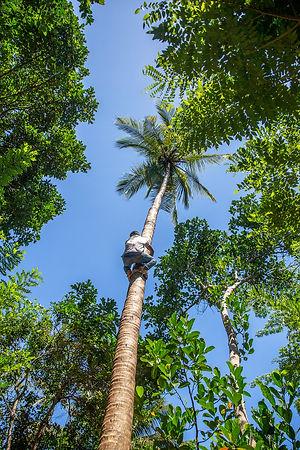 Boy cimbing coconut tree | Zanzibar | Tanzania | Shots and Tales