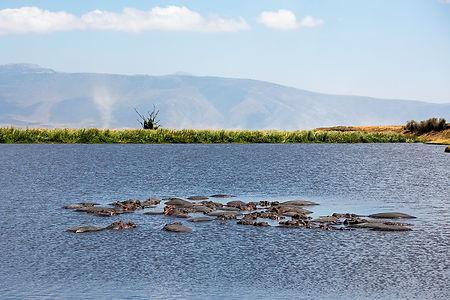 Hippos in a pool of water at Ngorongoro Crater, Tanzania | Shots and Tales
