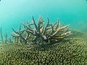 Coral in blue sea | Tumbatu Zanzibar | Shots and Tales