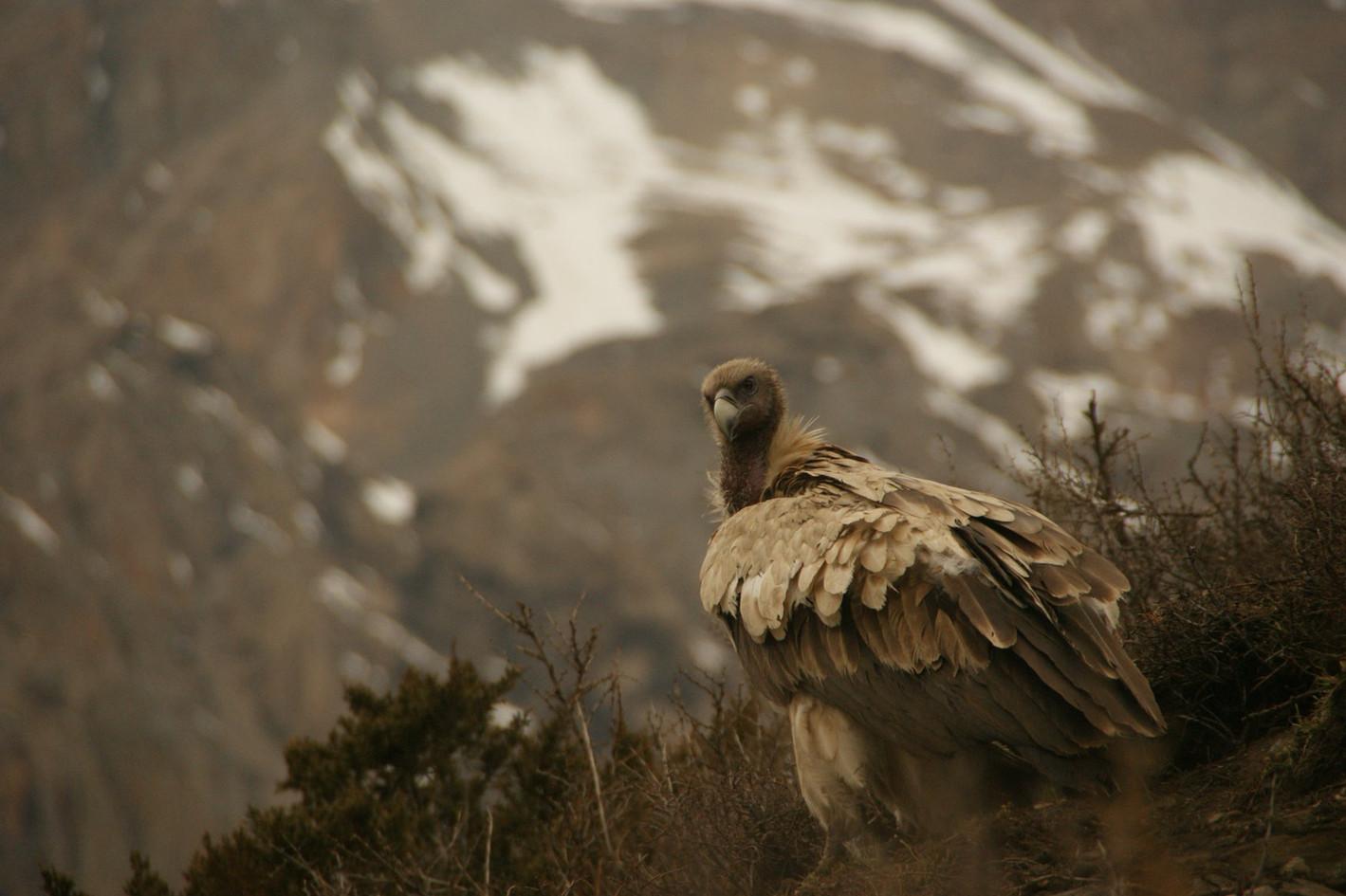 Photo by Angkami Sherpa