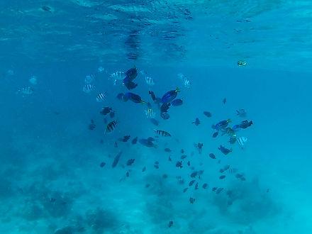 Fish in Blue Sea | Mnemba Atol Boat Tour | Zanzibar | Tanzania | Shots and Tales