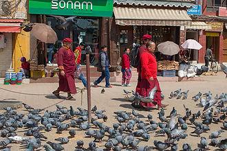 Buddhist monks and pigeons at Boudhanath, Boudha Stupa, Kathmandu, Nepal