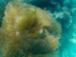 Fish in Coral Reef | Mnemba Atol Boat Tour | Zanzibar | Tanzania | Shots and Tales