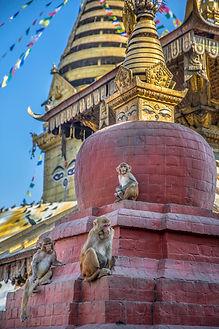 Three monkeys and Swayambhunath Temple detail,  Kathmandu, Nepal