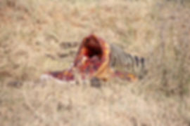 Zebra carcass in the Serengeti | Tanzania | Shots and Tales