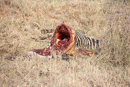 Zebra carcass in the Serengeti | Tanzania | Shots and Tales