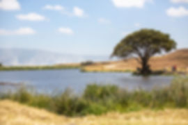 A lake, grass and a tree at Ngorongoro Crater, Tanzania | Shots and Tales