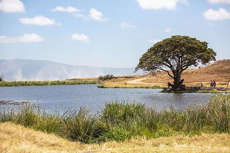 A lake, grass and a tree at Ngorongoro Crater, Tanzania | Shots and Tales