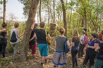 SU4E, Stand Up for Elephants, Tourists watching Elephant, Sauraha, Nepal