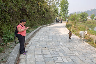 Woman and two goats on the passage around Bengas Lake, Pokhara, Nepal