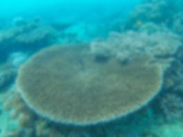 Coral Reef | Tumbatu Boat Tour | Zanzibar | Tanzania | Shots and Tales