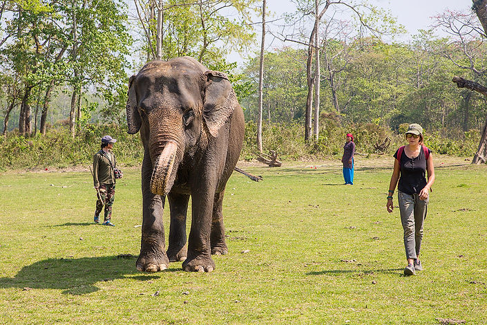 SU4E, Stand Up for Elephants, Elephant named Rupa Cali, Sauraha, Nepal