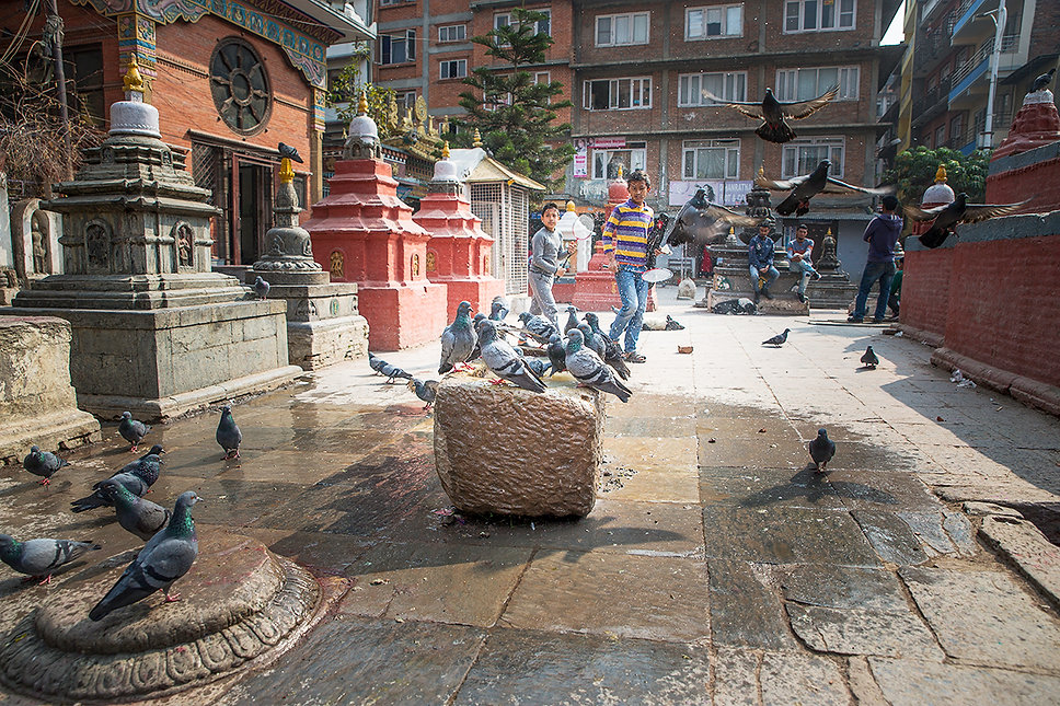 Pigeons bathing in water, at a temple and children playing in Kathmandu, Nepal