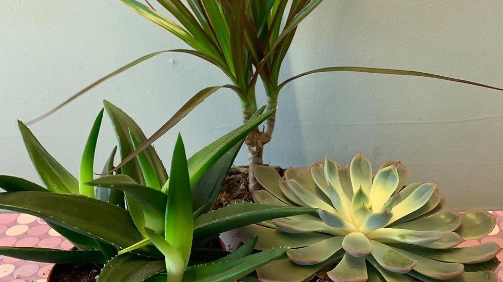 Trio plant set