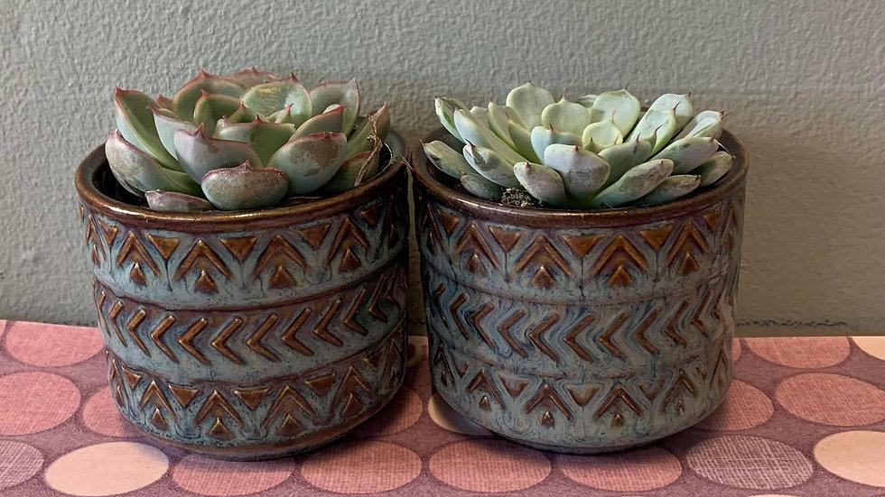 Mini Succulent twin pot