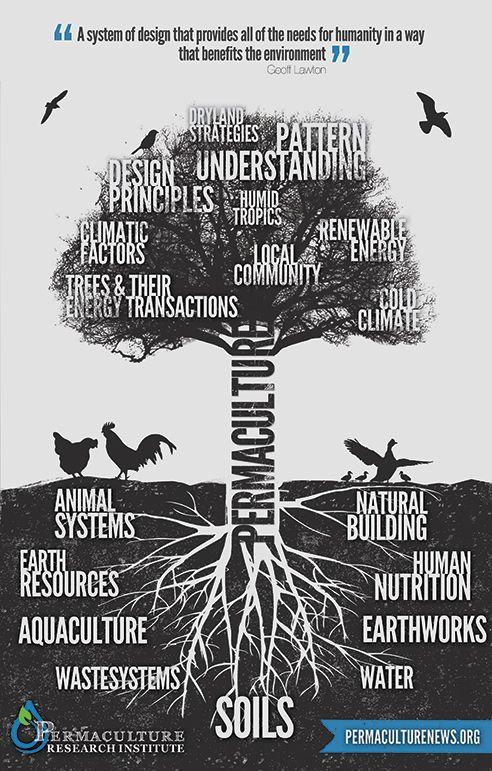 Dessin arbre permaculture.jpg