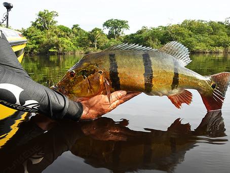 Por quê praticar o pesque e solte?