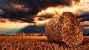 Changing mindsets about cyber security in farming and agriculture