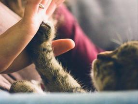 Ansvarsfraskrivelse hos dyreeiere ved omplassering av katter