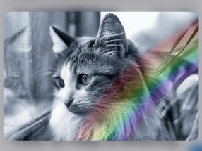 Katt i Sorg