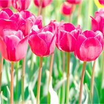 квіти-01.jpg