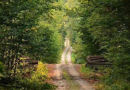 J'ai pu retourner marcher dans les bois !
