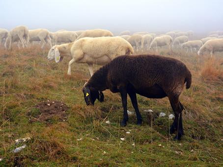 Les moutons noirs de la famille sont les libérateurs de leur arbre généalogique.