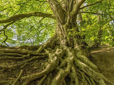 La circulation de l'énergie au sein de l'arbre généalogique.