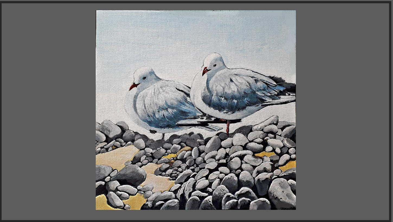 S202 Gulls at Amberley. Price: $270