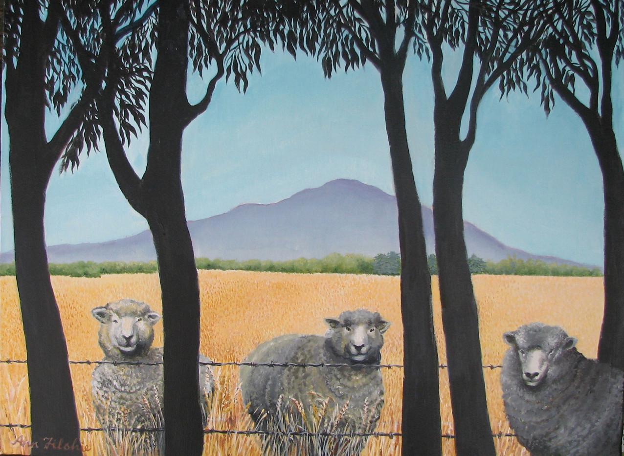 Sheep at fence.