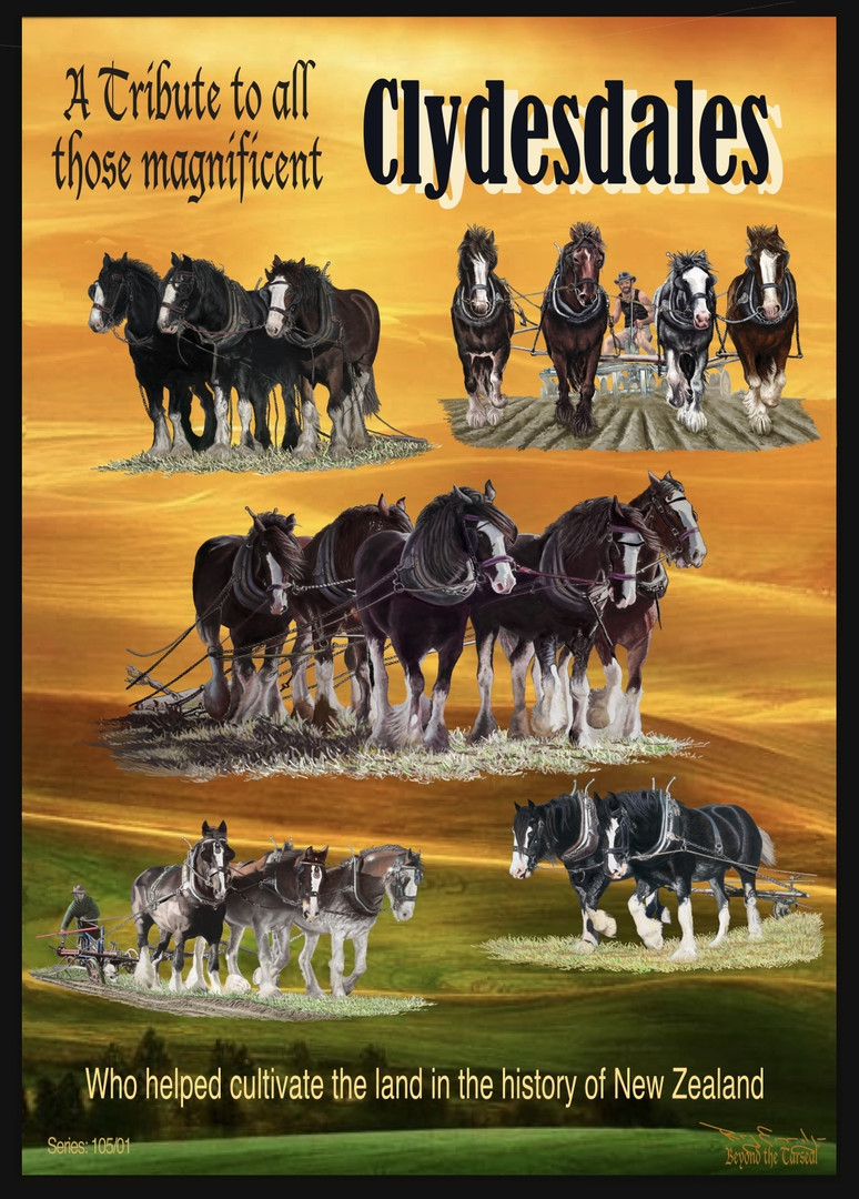 S105 Tribute to all those Clydesdales who helped cultivate the land in the history of New Zealand.