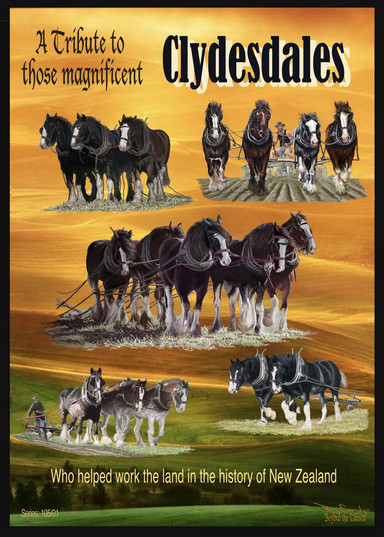 A tribut to those magificate Clydesdales -