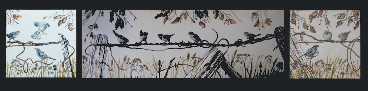 Sparrows on barbwire