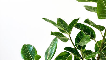 Green plant leaves on a white background on the blog page