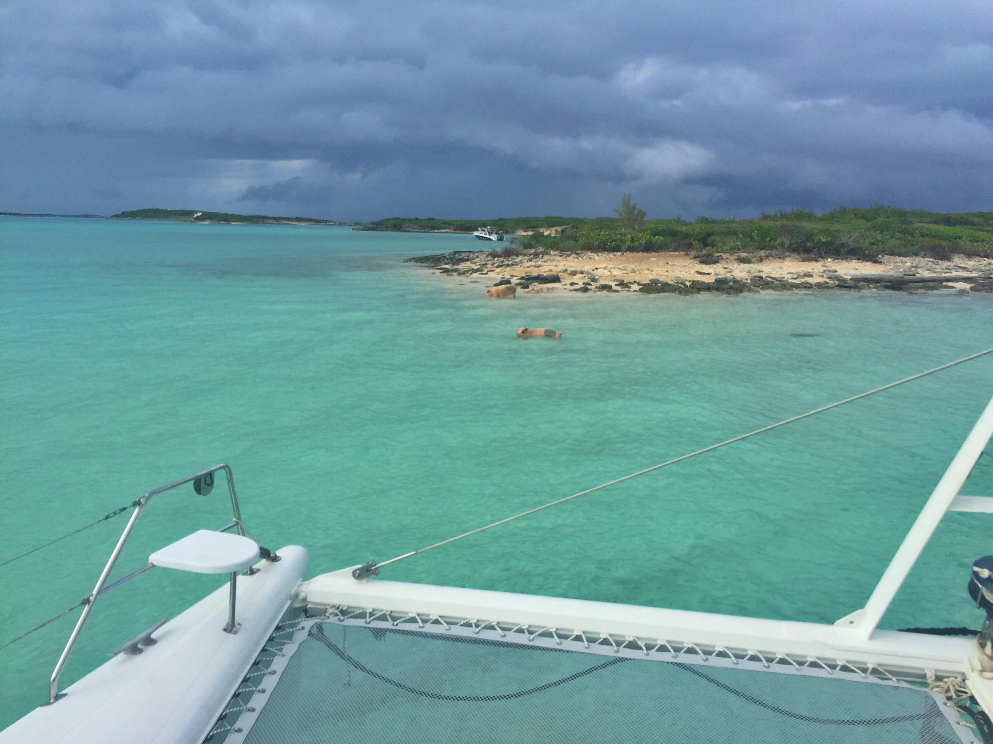 When Pigs Swim! (In Exuma, Bahamas!) - The Diva Diary