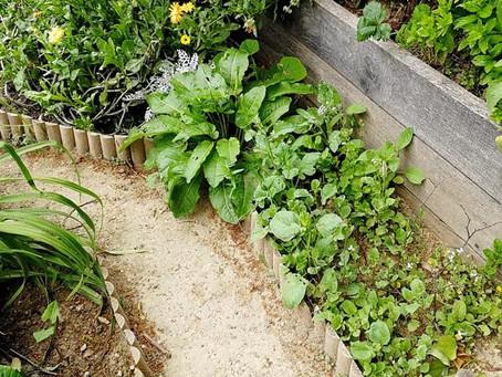 L'extension du jardin partagé: Le début des travaux