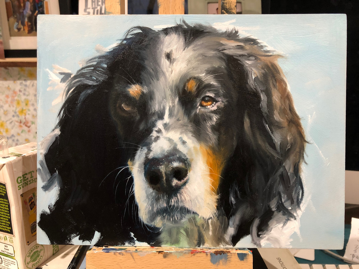 Blue - Dog portrait