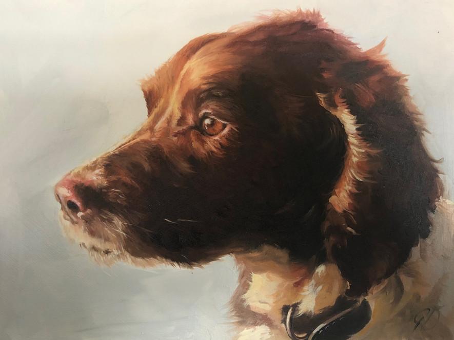 1 of Gail's 50 commission dog portraits