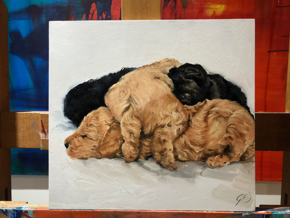 Pile of puppies - Dog portrait