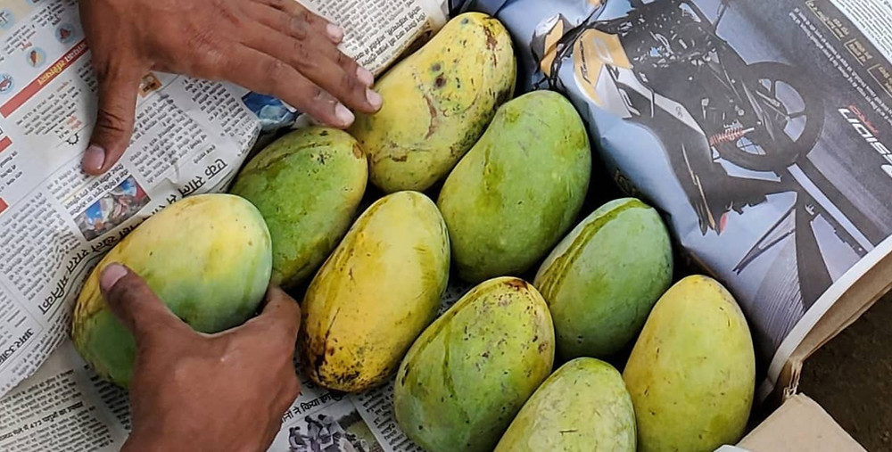 Are the mangoes you are eating Healthy?