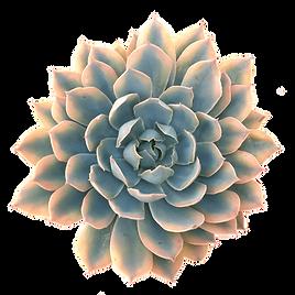 transparent-succulent-blue-heron-4.png