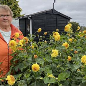 Terapi mod kræft og kemokure: Når livet er hårdest, så går Bente i haven