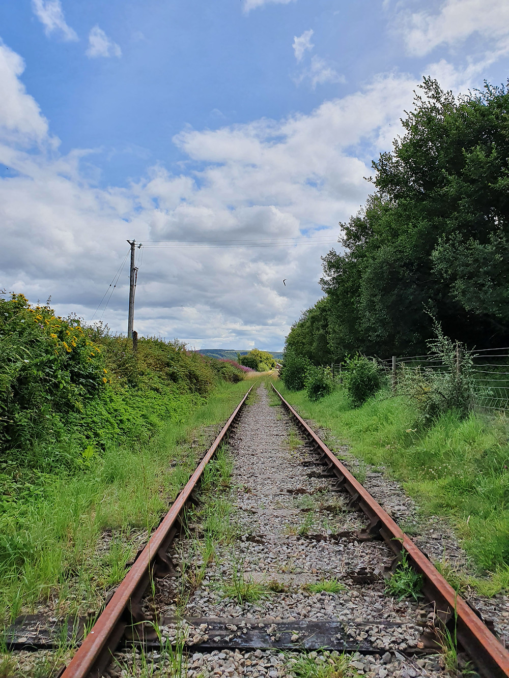 Rusty, overgrown track at Glantorfaen Crossing in late July 2020