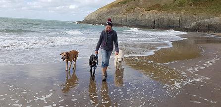 Dogs, Beach, Happy