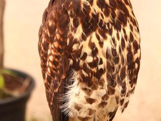 Galeão livre de colisões com pássaros há três meses.