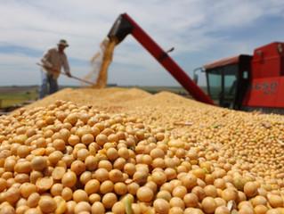 Exportação de grãos cresce 20% no Porto de Paranaguá