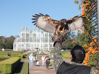 Curso de Introdução à Falcoaria e Manejo de Aves de Rapina em Curitiba
