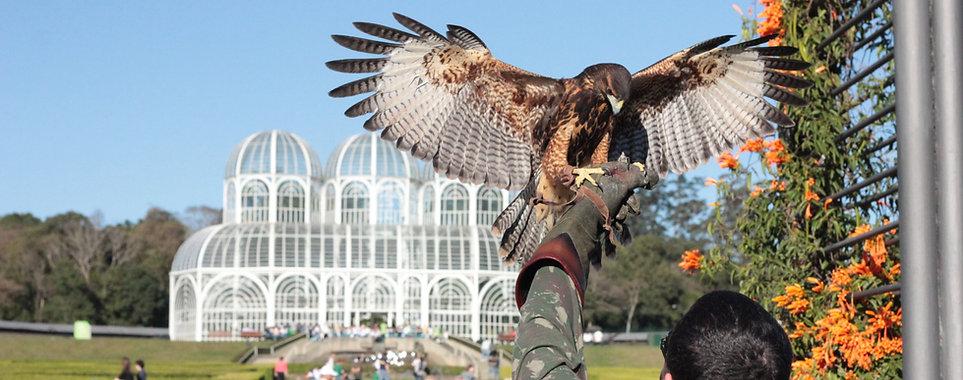 Controle de fauna Curitiba. Problemas com pombos
